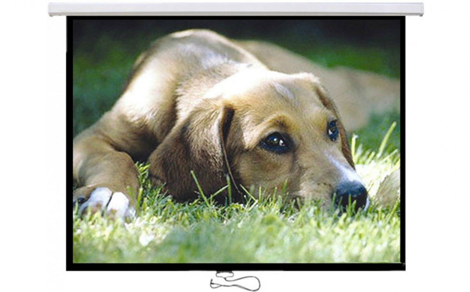 Купить Проекционный настенный экран Logan PRMC4